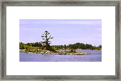 Lone Tree 3 Db  Framed Print