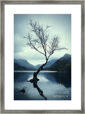Lone Tree Framed Print by Amanda Elwell