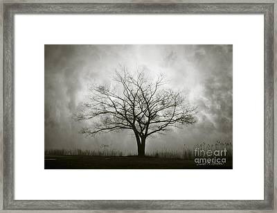 Lone Tree And Clouds Framed Print by Dave Gordon