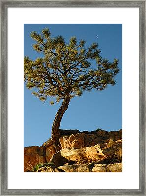 Lone Tree And Moon In Bryce Canyon Framed Print