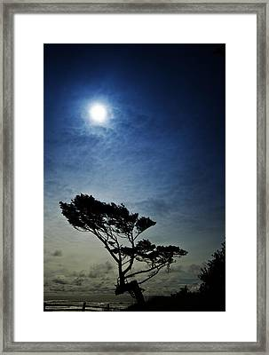 Lone Tree And Ocean Framed Print by Dale Stillman