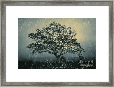 Lone Tree And Stormy Evening Framed Print by David Gordon