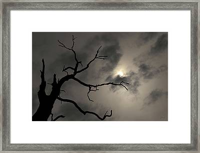 Framed Print featuring the photograph Lone Tree And Sun Toned by David Gordon