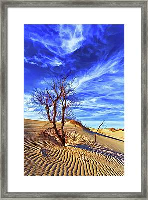 Lone Tree At Sandhills Framed Print
