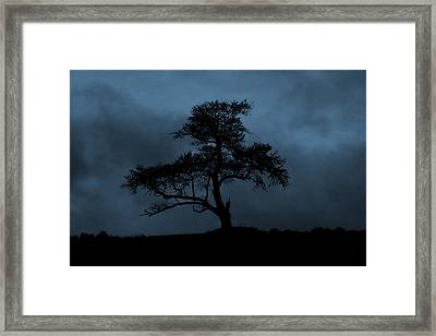 Lone Tree Blue Framed Print by Cindy Haggerty