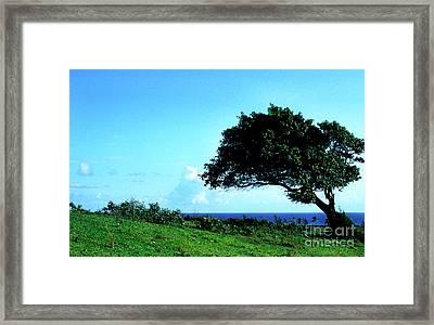 Lone Tree Blue Sea Framed Print by Thomas R Fletcher