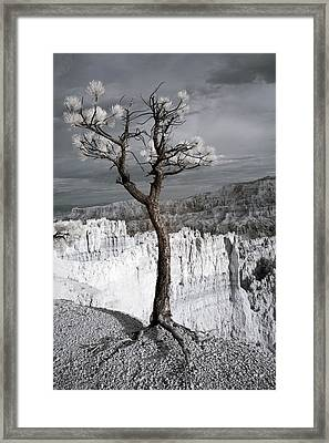 Lone Tree Canyon Framed Print by Mike Irwin