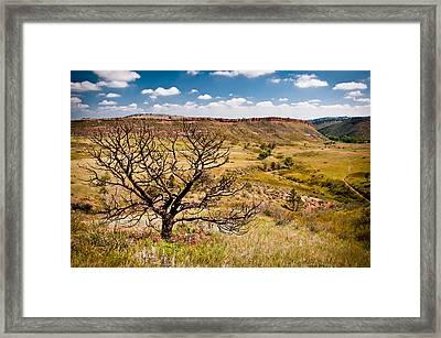 Lone Tree, Colorado Framed Print
