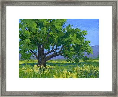 Lone Tree Framed Print by David King