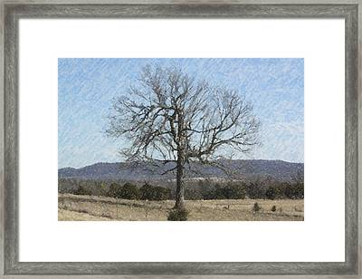 Lone Tree Framed Print by Donna G Smith