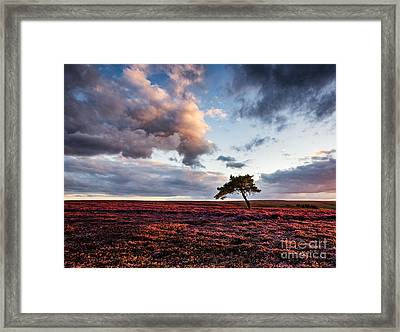 Lone Tree Egton Moor Framed Print by Janet Burdon