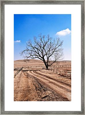Lone Tree February 2010 Framed Print