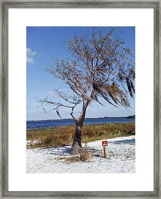 Lone Tree Framed Print by Francesco Roncone