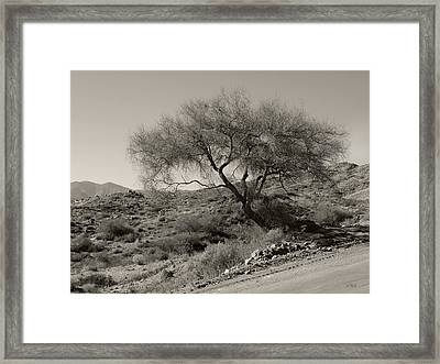 Framed Print featuring the photograph Lone Tree by Gordon Beck