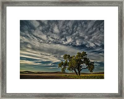 Lone Tree In Field Framed Print