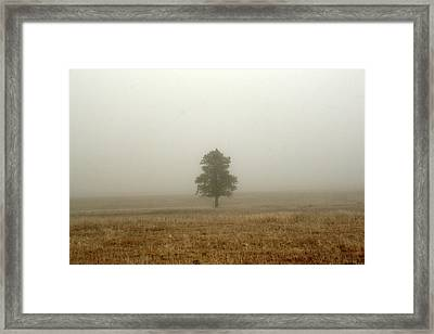 Lone Tree In Fog Framed Print