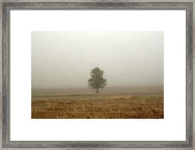 Lone Tree In Fog Framed Print by Suzanne Lorenz