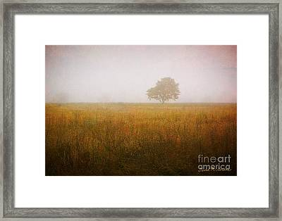Lone Tree In Meadow No. 2 Framed Print by Dave Gordon