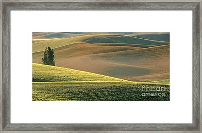 Lone Tree In The Palouse  Framed Print