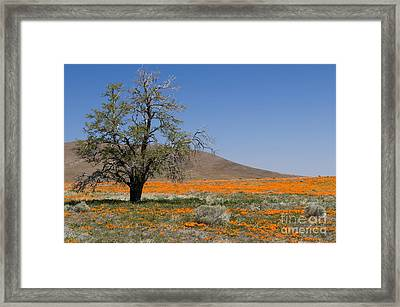 Lone Tree In The Poppies Framed Print by Sandra Bronstein