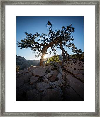 Lone Tree In Zion National Park Framed Print