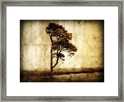 Lone Tree Framed Print by Julie Hamilton