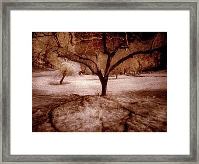 Lone Tree Framed Print by Michael Cleere