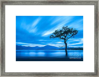 Lone Tree Milarrochy Bay Framed Print by Janet Burdon