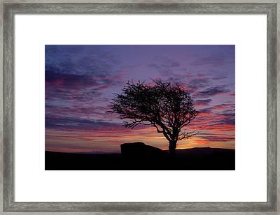 Lone Tree Near Holwell Tor On Dartmoor Framed Print by Pete Hemington