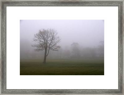 Lone Tree On A Golf Course In The Fog Framed Print by Todd Gipstein