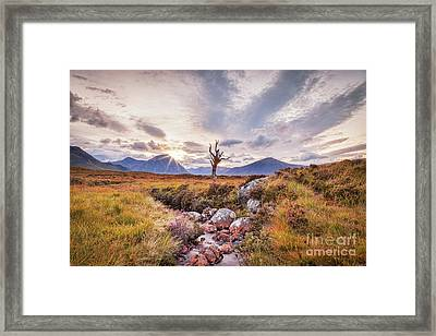 Lone Tree On Rannoch Moor In Scotland Framed Print by Colin and Linda McKie