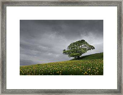 Lone Tree On The Kent Downs.  Framed Print by Ian Hufton