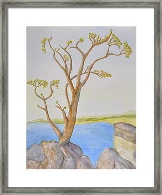 Lone Tree On The Ocean Framed Print by Jonathan Galente