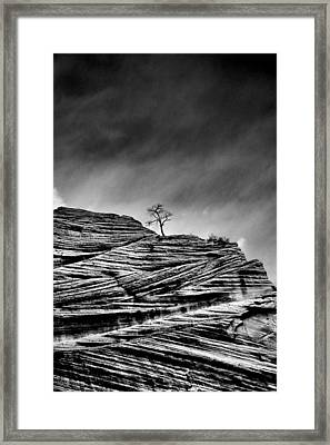 Lone Tree Rid Framed Print by Sarah-jane Laubscher