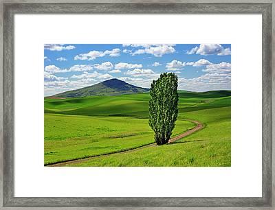 Lone Tree - Road - Steptoe Butte Framed Print by Nikolyn McDonald