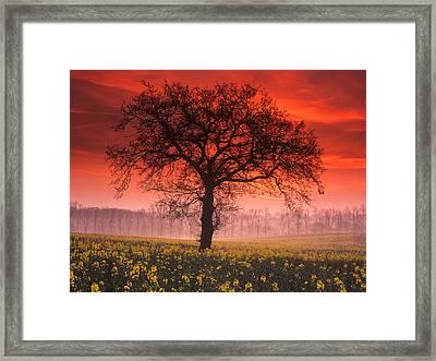 Lone Tree Sunrise Framed Print by John Perriment