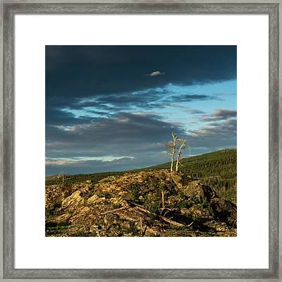 Lone Tree Sunset Framed Print