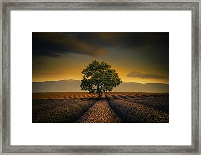 Lone Tree Valensole Framed Print by Alexander Hill