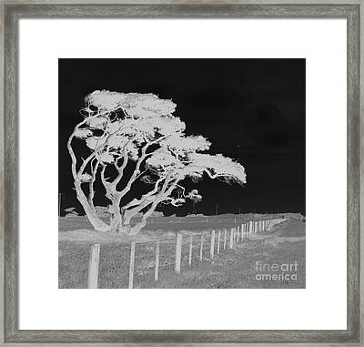 Lone Tree, West Coast Framed Print