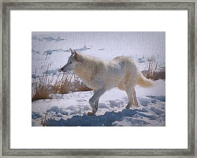 Lone White Wolf Framed Print