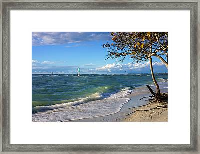 Lone Windsurfer At Wiggins Pass Framed Print