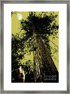 Lone Wolf Howling At The Moon . 7d5390 Framed Print