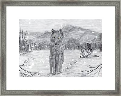 Lone Wolf Framed Print by Philip Harvey