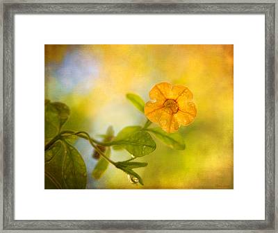 Lone Yellow Flower Framed Print