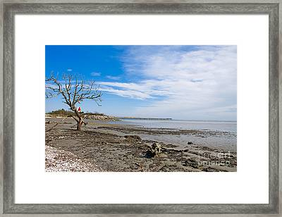 Framed Print featuring the photograph Lonely Beach At Christmas by Sandy Adams