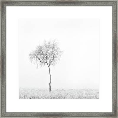 Lonely Birch Tree Framed Print