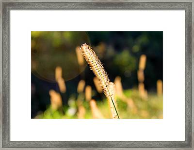 Lonely But Not Alone Framed Print by Milena Ilieva