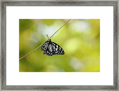 Lonely Butterfly  Framed Print