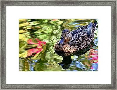 Framed Print featuring the photograph Lonely Duckie by Elaine Malott