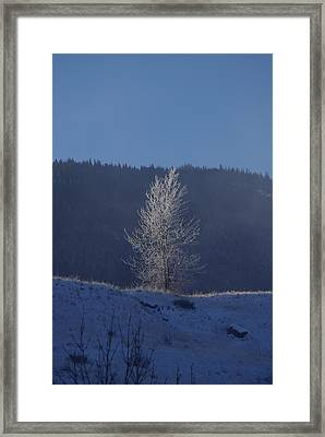 Lonely Frosty Tree Framed Print